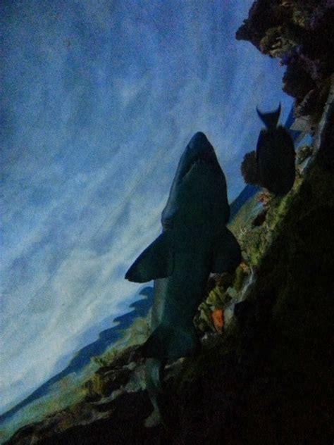Sea Life Entertainment Seaworld San Diego Clever