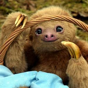 Sloths In Pajamas | www.pixshark.com - Images Galleries ...