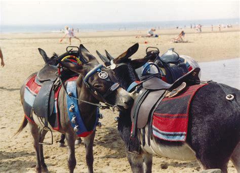 protect  welfare  working donkeys  donkey