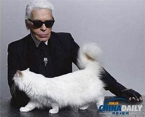 Choupette Chat Karl : c 39 est l 39 amour fou entre karl lagerfeld et sa chatte choupette ~ Medecine-chirurgie-esthetiques.com Avis de Voitures