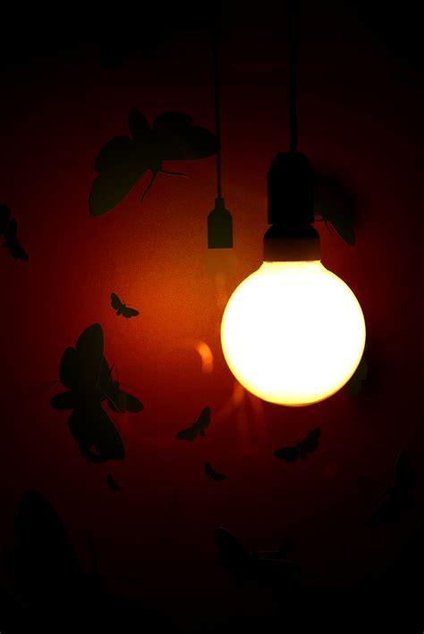 Warum Fliegen Insekten Ins Licht by Warum Fliegen Motten Ins Licht Foto Bild