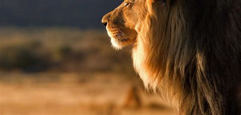 Facts, Travel And News About Kenya