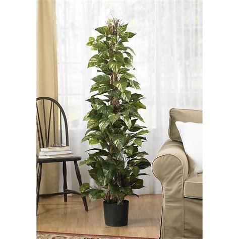 56 Best Images About Pothos On Pinterest  Silk Plants