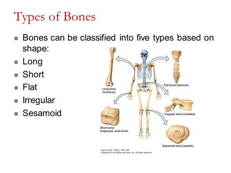 Lab Lesson #5 Exercises 9, 10 Overview Of The Skeleton