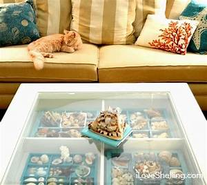 Top Seashell Display Table Ideas - Completely Coastal