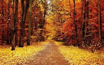 Trees Fall Wallpapertag