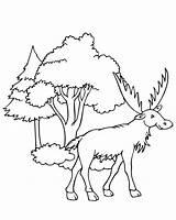 Coloring Moose Pages Printable Elk Deer Sheets Worksheet Funny Simple Toddler Sheet Template Books Cartoon Face Head Bull Male Getcoloringpages sketch template