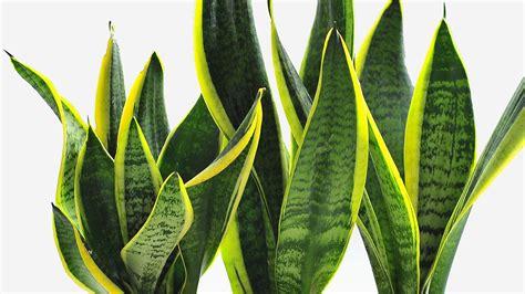 designer plants want to be more productive buy some desk plants co design business design