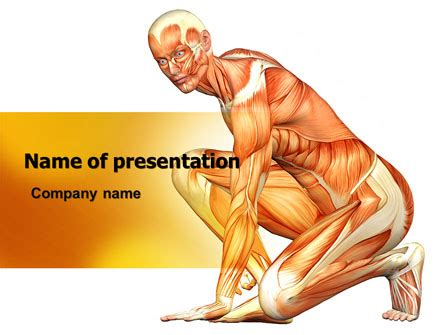 muscles   human body powerpoint template backgrounds