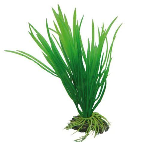 hobby cyperus 16cm plante artificielle pour aquarium d 233 corations pour aquarium plantes