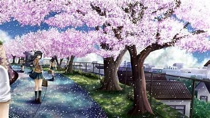 Blossom Cherry Anime Wallpapersafari