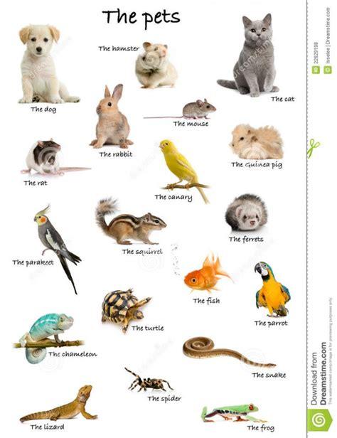 hermosas imagenes de animales domesticos en ingles