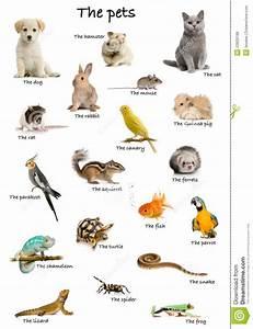 Hermosas imágenes de animales domésticos en Ingles para ...