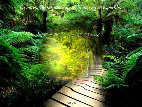 preciosos caminos  hermosas frases precious roads