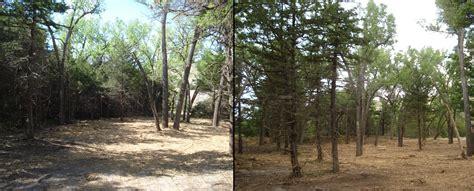 fuels reduction forest restoration nebraska forest service