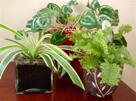 How To Overwinter Houseplants
