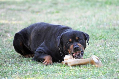 stop dog food aggression