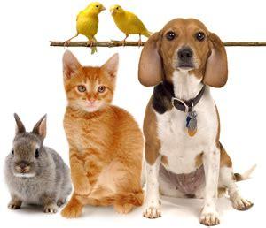 pat les animaux de compagnie vocabulaire anglais les animaux de compagnie en anglais pets expression anglaise