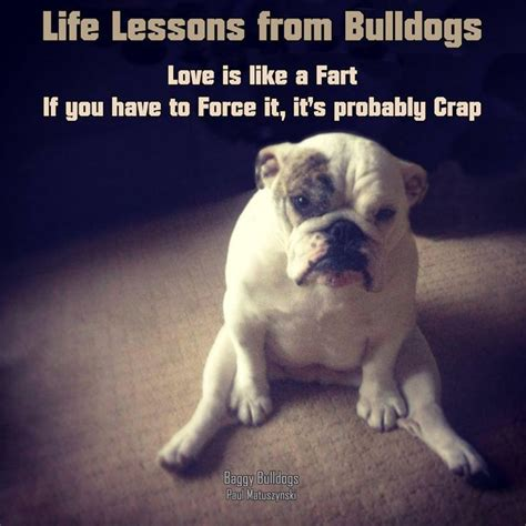 cute english bulldog quotes