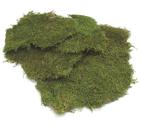 floral sheet moss