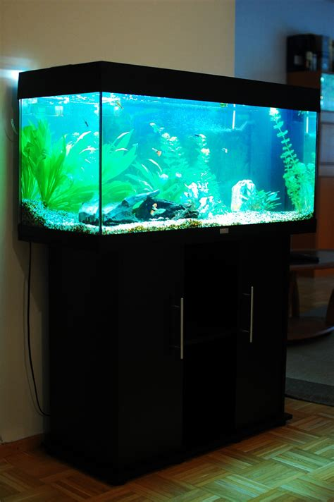 je suis absente du bureau aquarium juwel 180 28 images juwel ag 180 led purchase