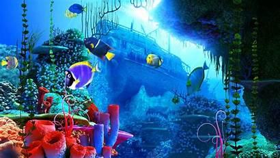 Reef Coral Wallpapers Screensavers Screensaver 3d Backgrounds