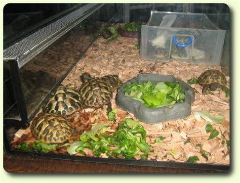 le terrarium les tortues terrestres vivelestortues com