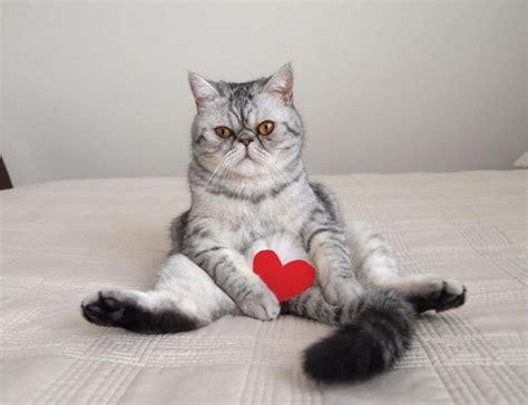 3f si鑒e social gatti quando la posa è tutto repubblica it