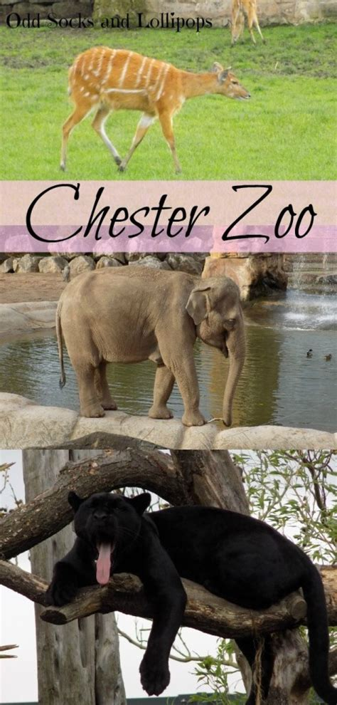 zoo chester animals guess thoughts visit