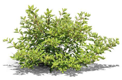 bushes shrubs cut out ordinary bush cut out trees and plants vishopper