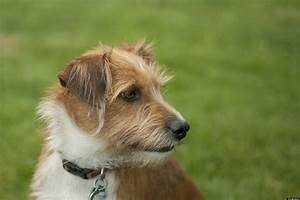 Mixed Breed Dog Adoption: Reasons To Love A Mutt | HuffPost
