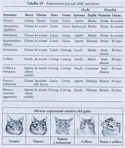 Il Linguaggio Dei Gatti Interesting Come Capire Il