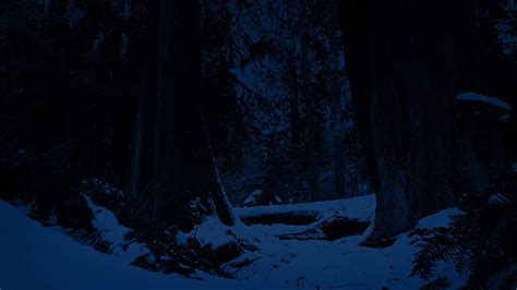 Moving Through Snowy Forest At Night By Rockfordmedia