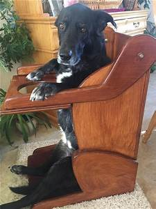 Family Builds Special Chair For Dog Who Can U2019t Eat Normally
