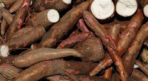 jeux de cuisine de de noel manioc plantation taille et entretien