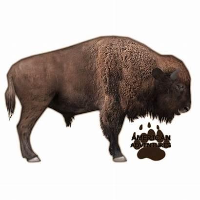 Bison American Zt2 Wikia Fandom