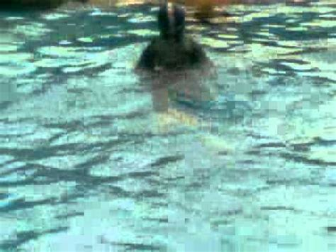 renang gaya dada breaststroke swimming technique youtube