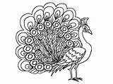 Peacock Coloring Female Outline Peahen Pages Drawing Printable Kidsplaycolor Peacocks Animal Glass Painting Feathers Peafowl Getdrawings Coloringstar Colors sketch template
