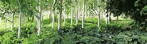 Stauden Für Halbschatten : pflanzen f r den halbschatten staudeng rtnerei gr fin von zeppelin ~ Frokenaadalensverden.com Haus und Dekorationen