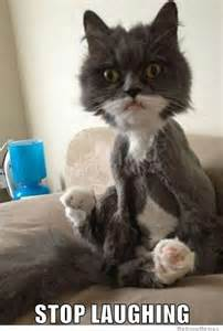 cat stopped hair clippers into a bathroom do it yourself diy
