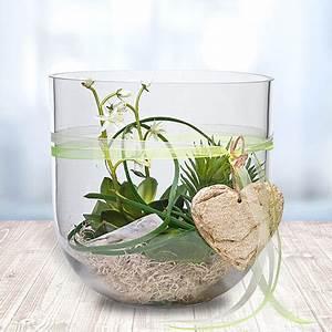 Deko Für Vasen : deko glas echeveria 24cm und pralinen herzen jetzt bestellen bei valentins ~ Orissabook.com Haus und Dekorationen