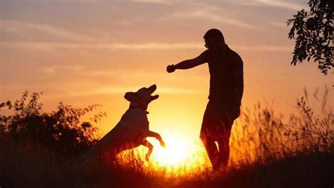simple ways  improve  bond   dog mnn