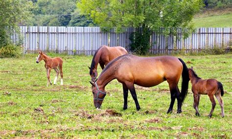 grazing horses field depositphotos jareso