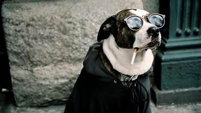 Cool 3d Dogs Funny Wallpapers Desktop Widescreen