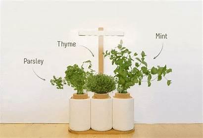Herbs Oregano Fresh Kickstarter Mint Coriander Parsley