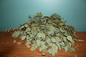 Eucalyptus  Assorted Varieties