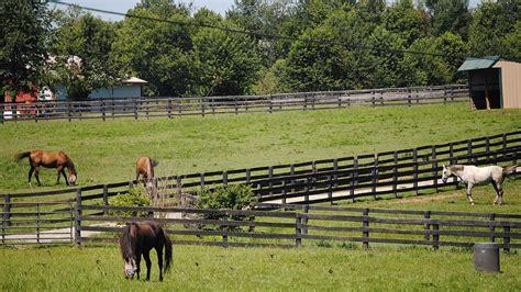friends equine wikipedia