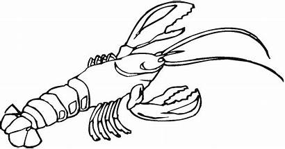 Lobster Coloring Outline Clipart Pages Clip Animal