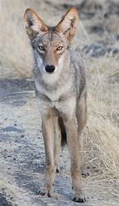 R Link 2 Coyote : the stanford dish ~ Medecine-chirurgie-esthetiques.com Avis de Voitures