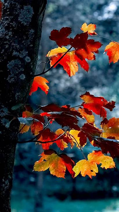 Iphone Autumn Fall Aesthetic Leaves Phone Wallpapers